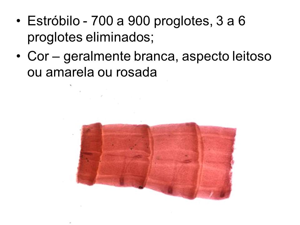 Estróbilo - 700 a 900 proglotes, 3 a 6 proglotes eliminados;