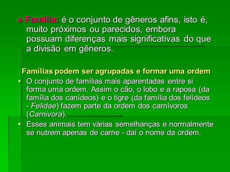 Famílias podem ser agrupadas e formar uma ordem