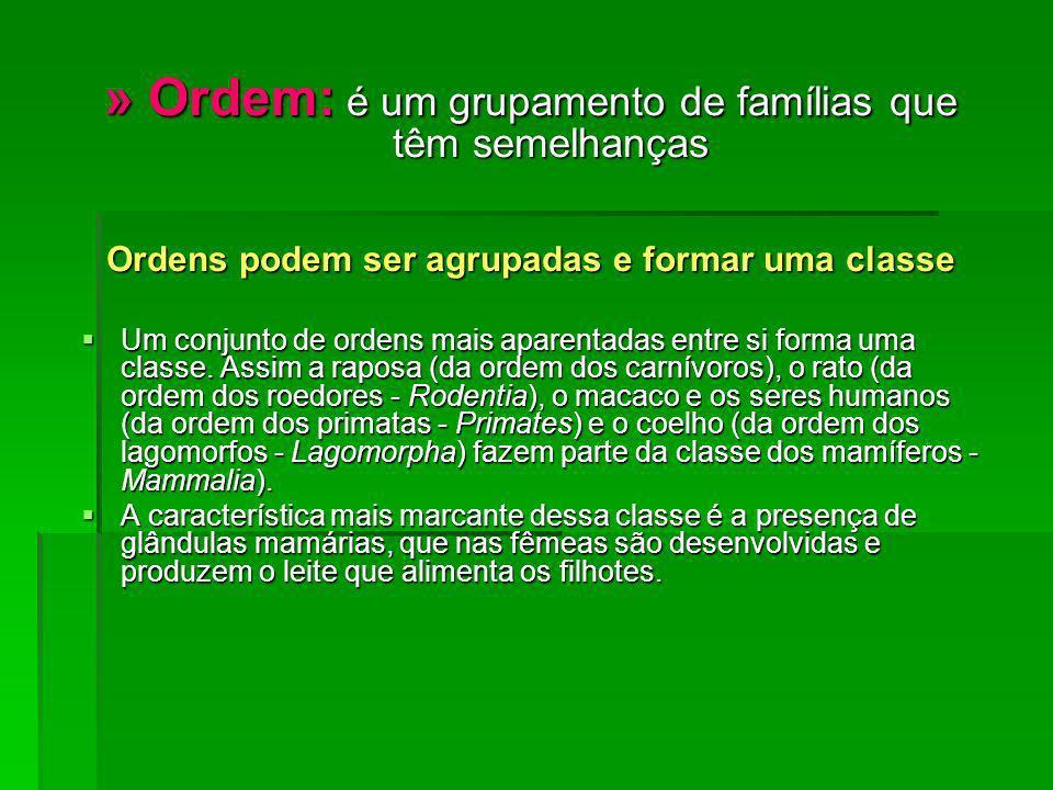 Ordens podem ser agrupadas e formar uma classe