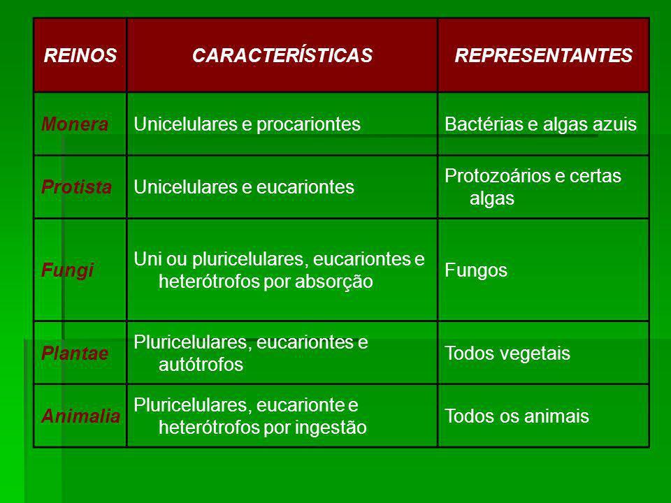 REINOS CARACTERÍSTICAS. REPRESENTANTES. Monera. Unicelulares e procariontes. Bactérias e algas azuis.