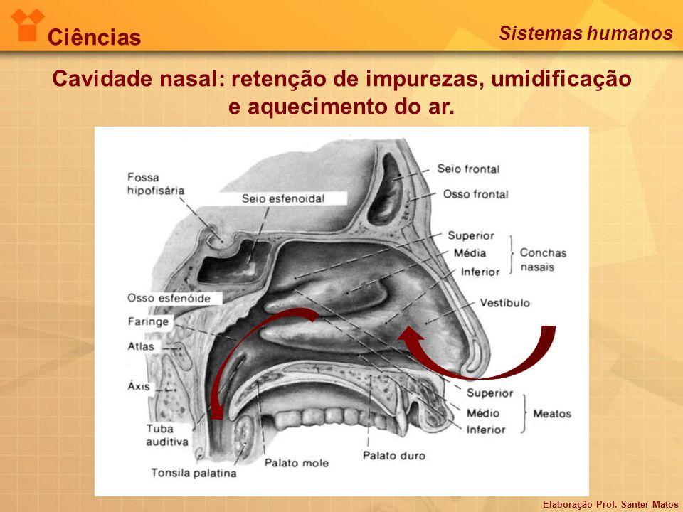 Cavidade nasal: retenção de impurezas, umidificação