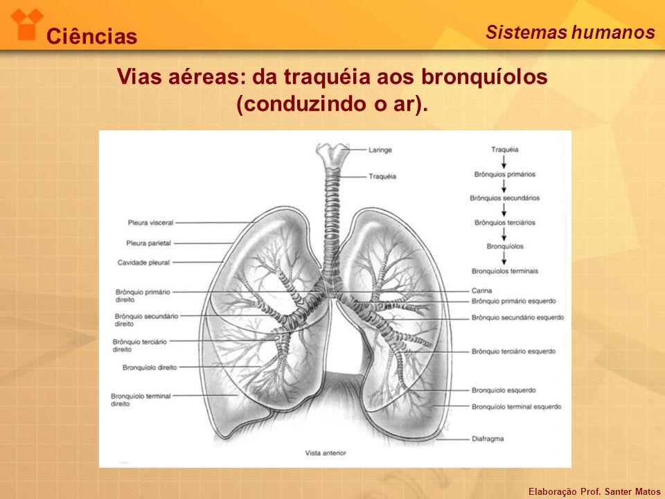 Vias aéreas: da traquéia aos bronquíolos