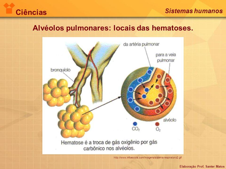 Alvéolos pulmonares: locais das hematoses.