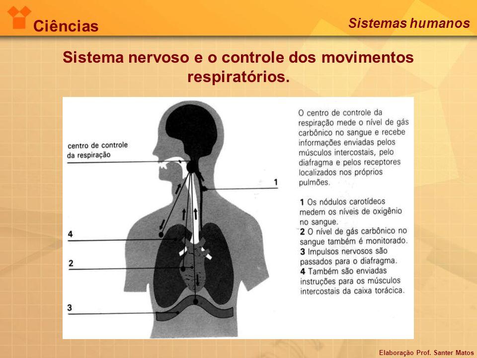 Sistema nervoso e o controle dos movimentos