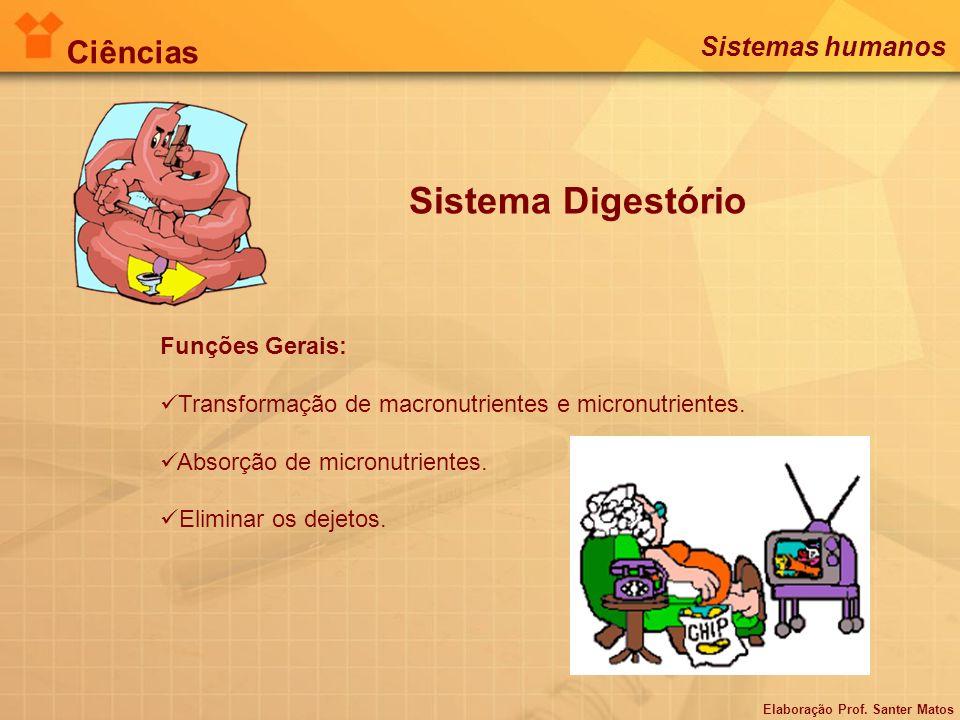 Sistema Digestório Ciências Sistemas humanos Funções Gerais: