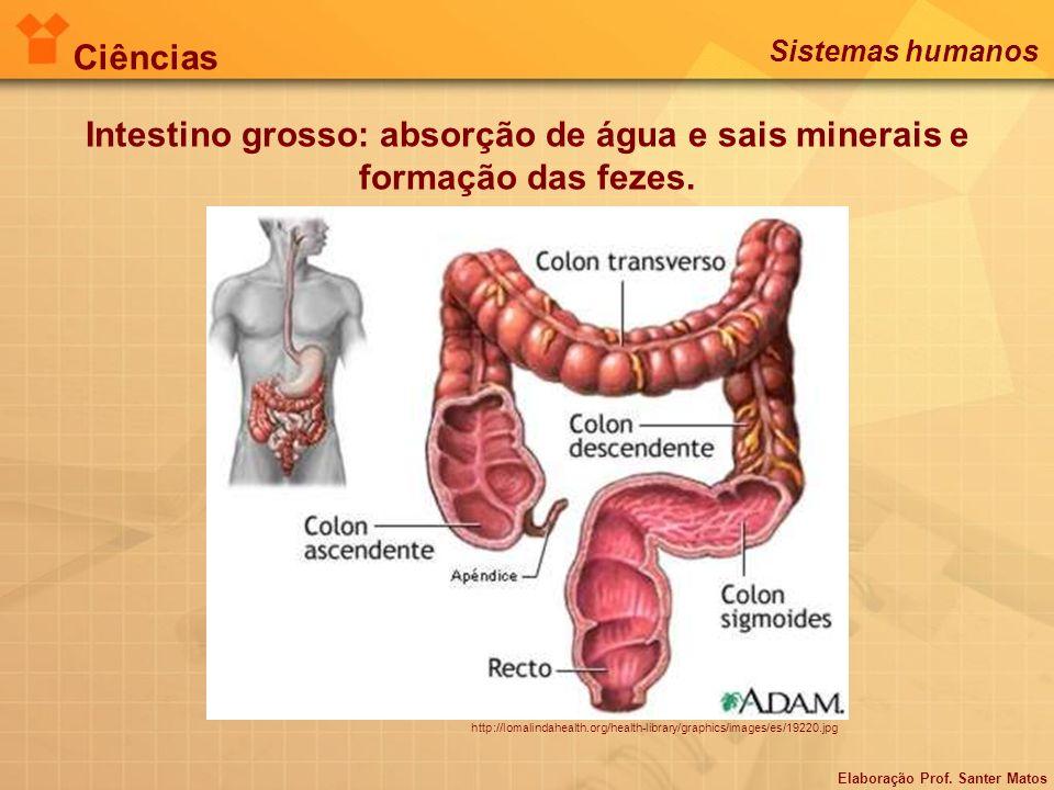 Ciências Sistemas humanos. Intestino grosso: absorção de água e sais minerais e formação das fezes.