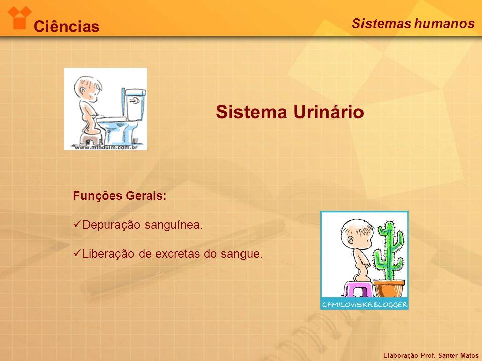Sistema Urinário Ciências Sistemas humanos Funções Gerais: