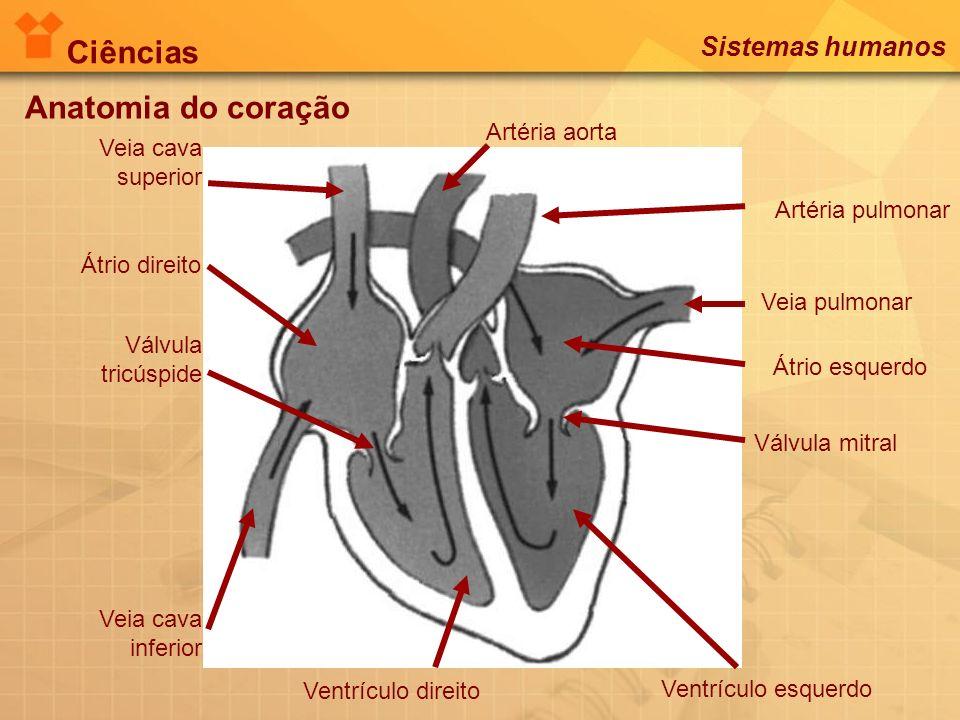 Ciências Anatomia do coração Sistemas humanos Artéria aorta Veia cava