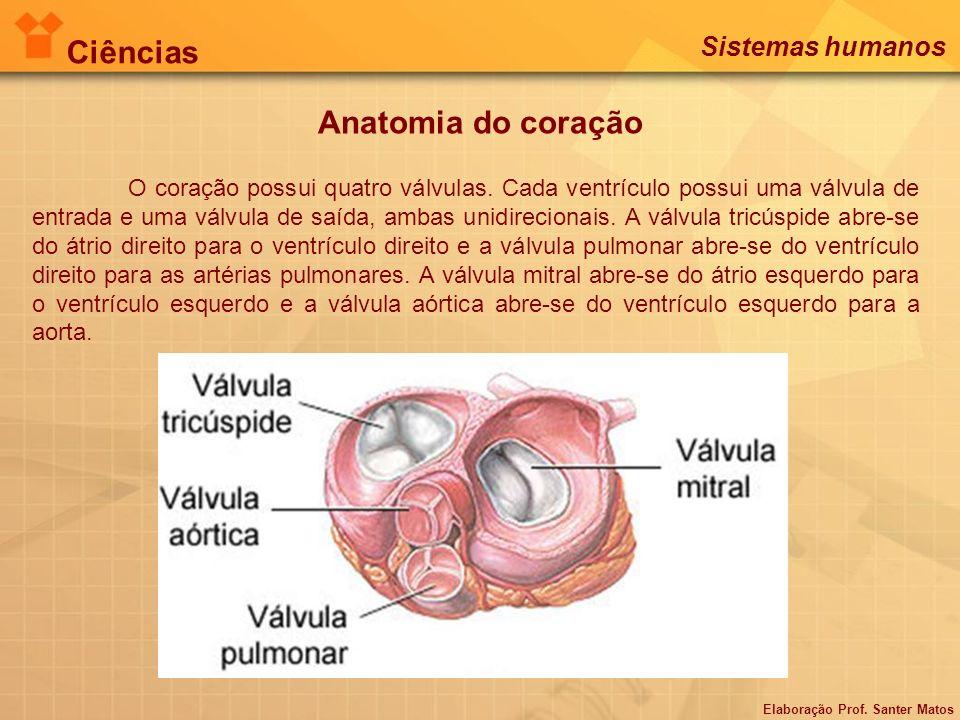 Ciências Anatomia do coração Sistemas humanos