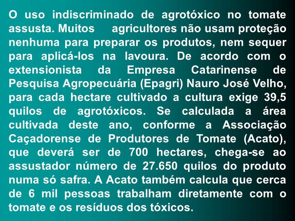 O uso indiscriminado de agrotóxico no tomate assusta
