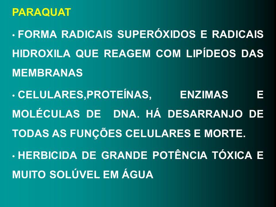 PARAQUAT FORMA RADICAIS SUPERÓXIDOS E RADICAIS HIDROXILA QUE REAGEM COM LIPÍDEOS DAS MEMBRANAS.