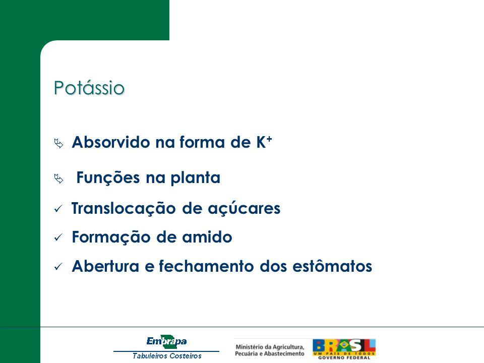 Potássio Absorvido na forma de K+ Funções na planta