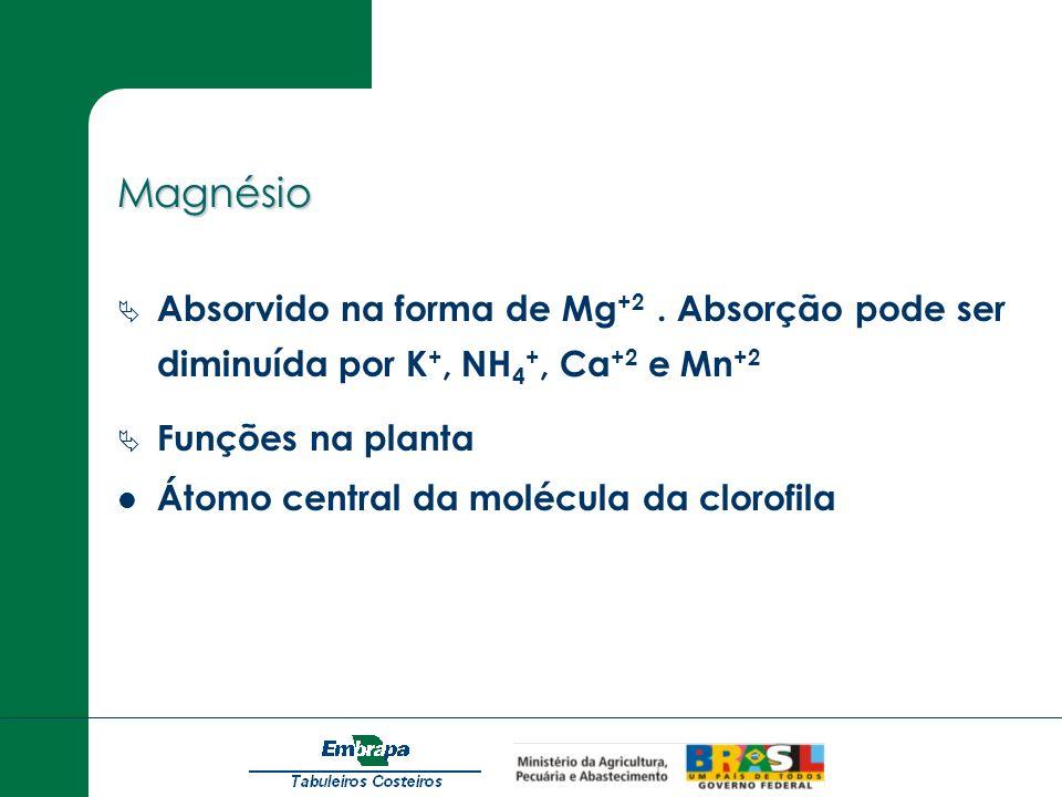 MagnésioAbsorvido na forma de Mg+2 . Absorção pode ser diminuída por K+, NH4+, Ca+2 e Mn+2. Funções na planta.