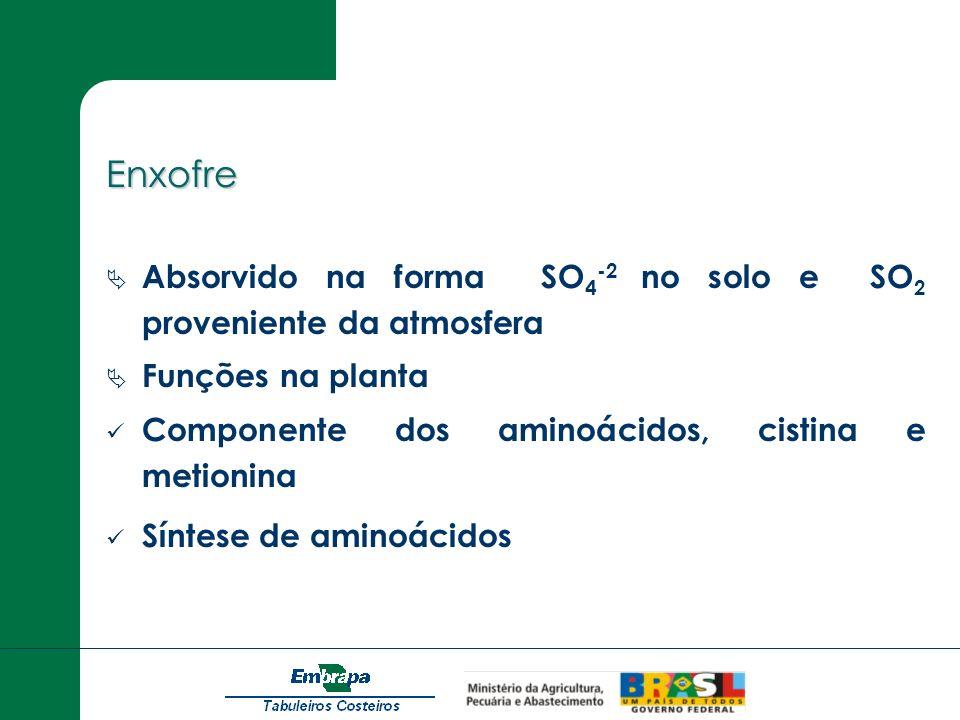 EnxofreAbsorvido na forma SO4-2 no solo e SO2 proveniente da atmosfera. Funções na planta. Componente dos aminoácidos, cistina e metionina.