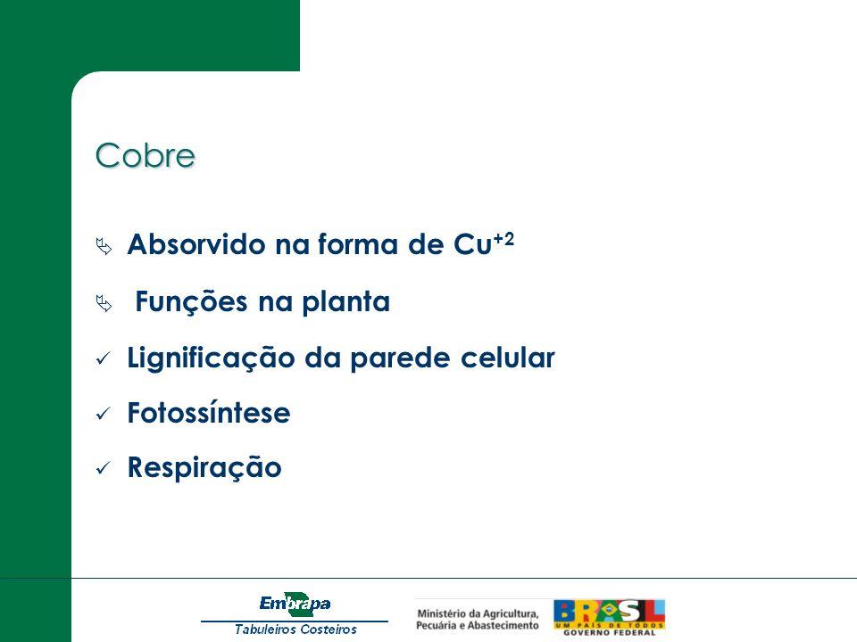 Cobre Absorvido na forma de Cu+2 Funções na planta