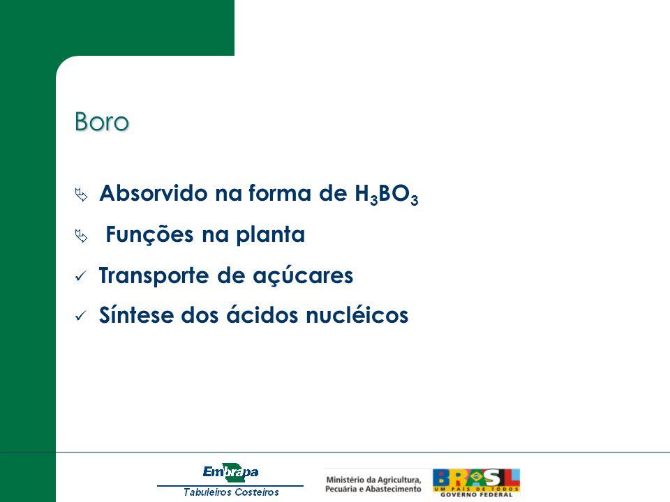 Boro Absorvido na forma de H3BO3 Funções na planta