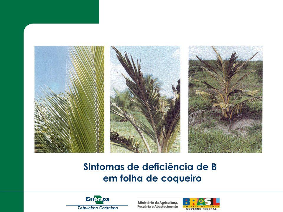 Sintomas de deficiência de B em folha de coqueiro