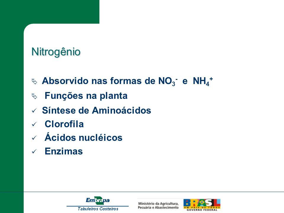 Nitrogênio Absorvido nas formas de NO3- e NH4+ Funções na planta