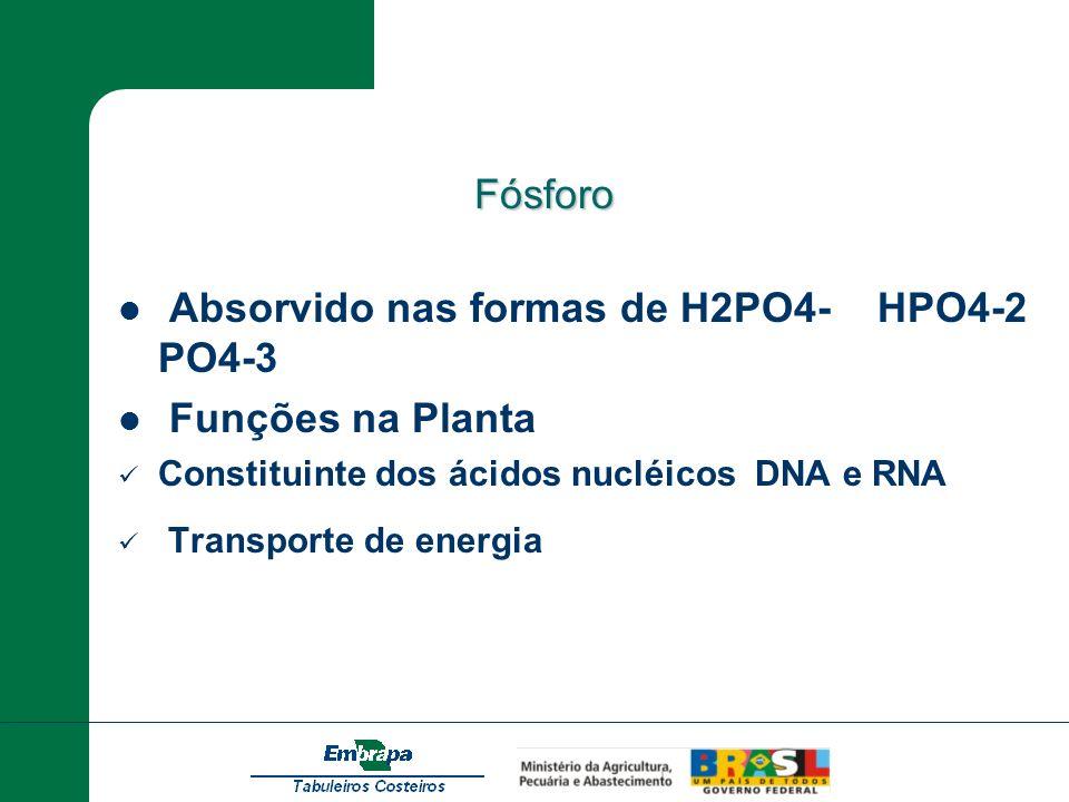 Absorvido nas formas de H2PO4- HPO4-2 PO4-3 Funções na Planta