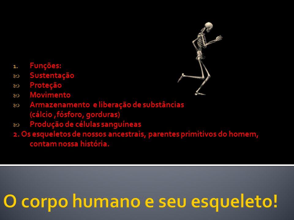 O corpo humano e seu esqueleto!