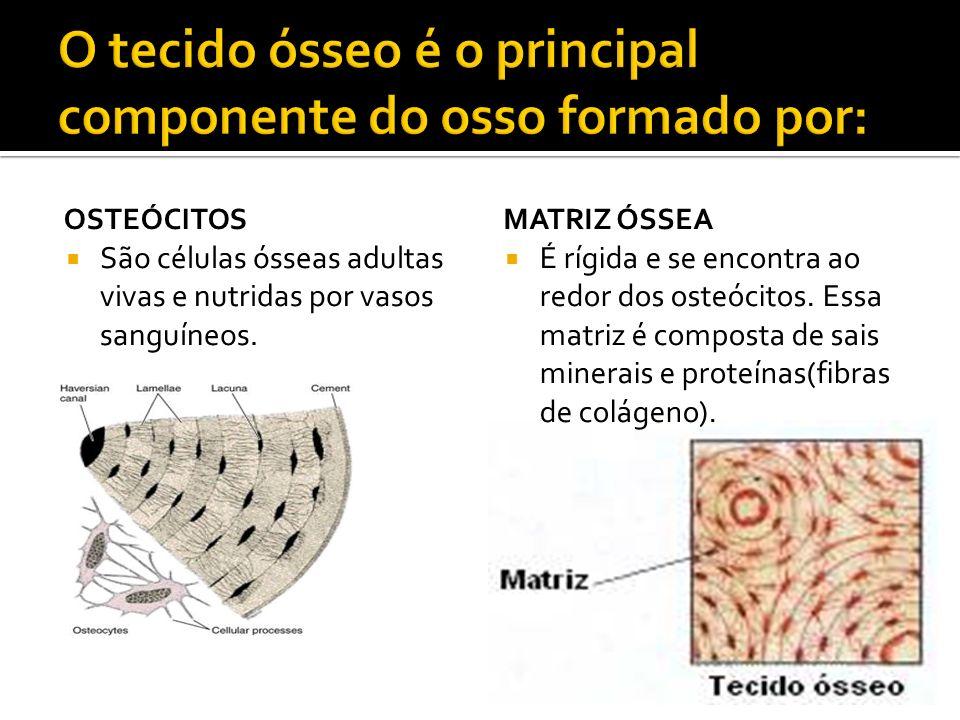 O tecido ósseo é o principal componente do osso formado por: