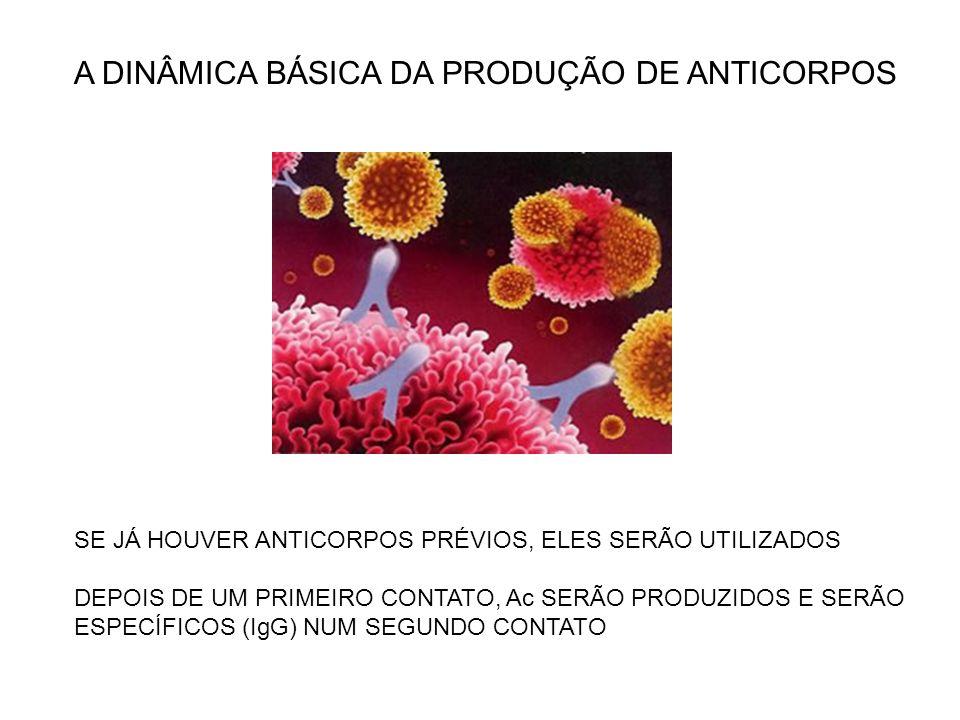 A DINÂMICA BÁSICA DA PRODUÇÃO DE ANTICORPOS