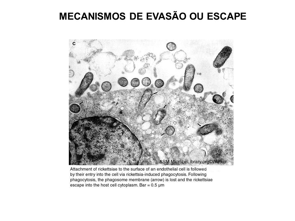 MECANISMOS DE EVASÃO OU ESCAPE