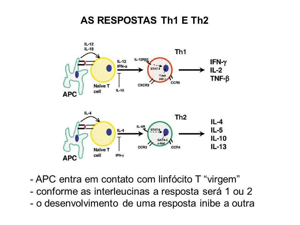 AS RESPOSTAS Th1 E Th2 APC entra em contato com linfócito T virgem conforme as interleucinas a resposta será 1 ou 2.