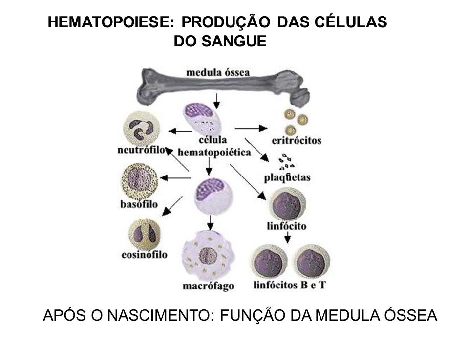 HEMATOPOIESE: PRODUÇÃO DAS CÉLULAS