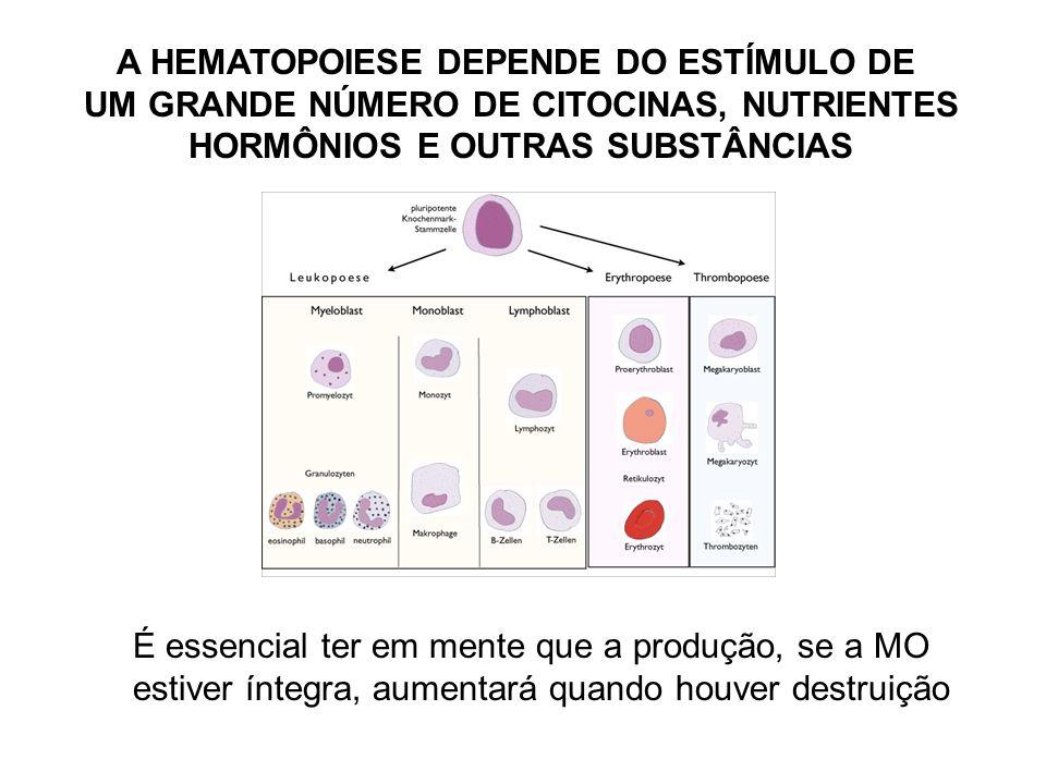 A HEMATOPOIESE DEPENDE DO ESTÍMULO DE