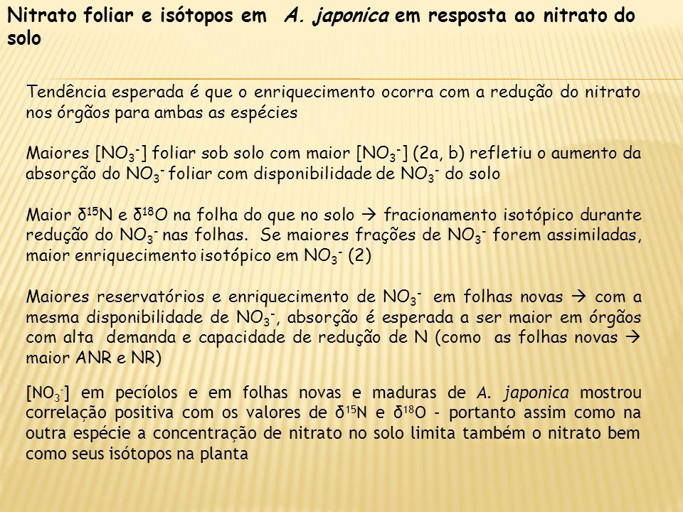 Nitrato foliar e isótopos em A. japonica em resposta ao nitrato do solo