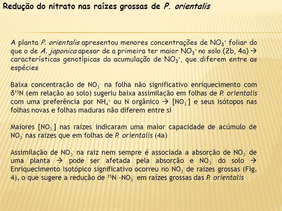 Redução do nitrato nas raízes grossas de P. orientalis