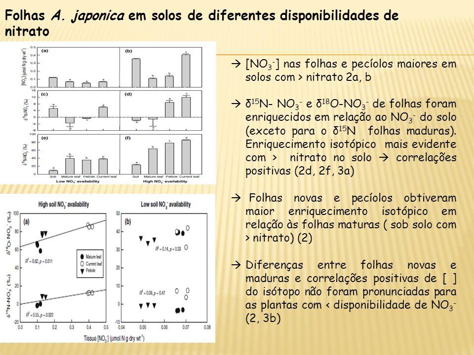 Folhas A. japonica em solos de diferentes disponibilidades de nitrato