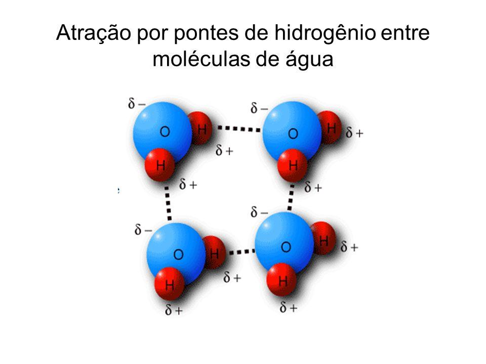 Atração por pontes de hidrogênio entre moléculas de água