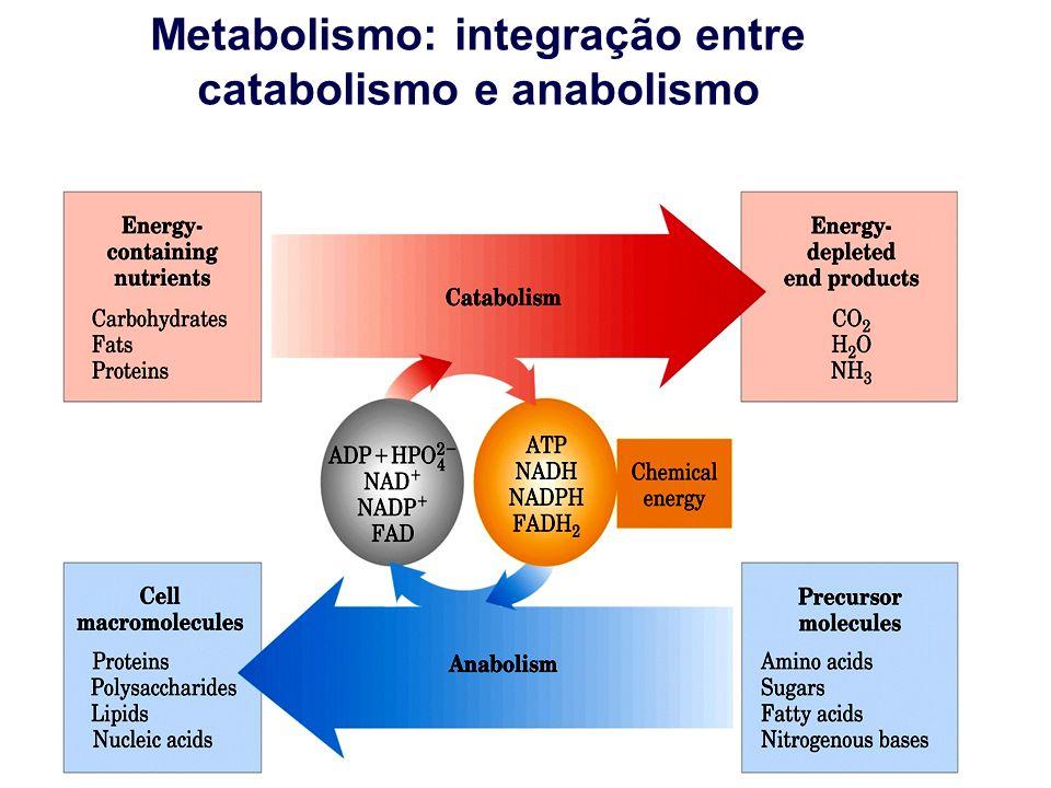 Metabolismo: integração entre catabolismo e anabolismo