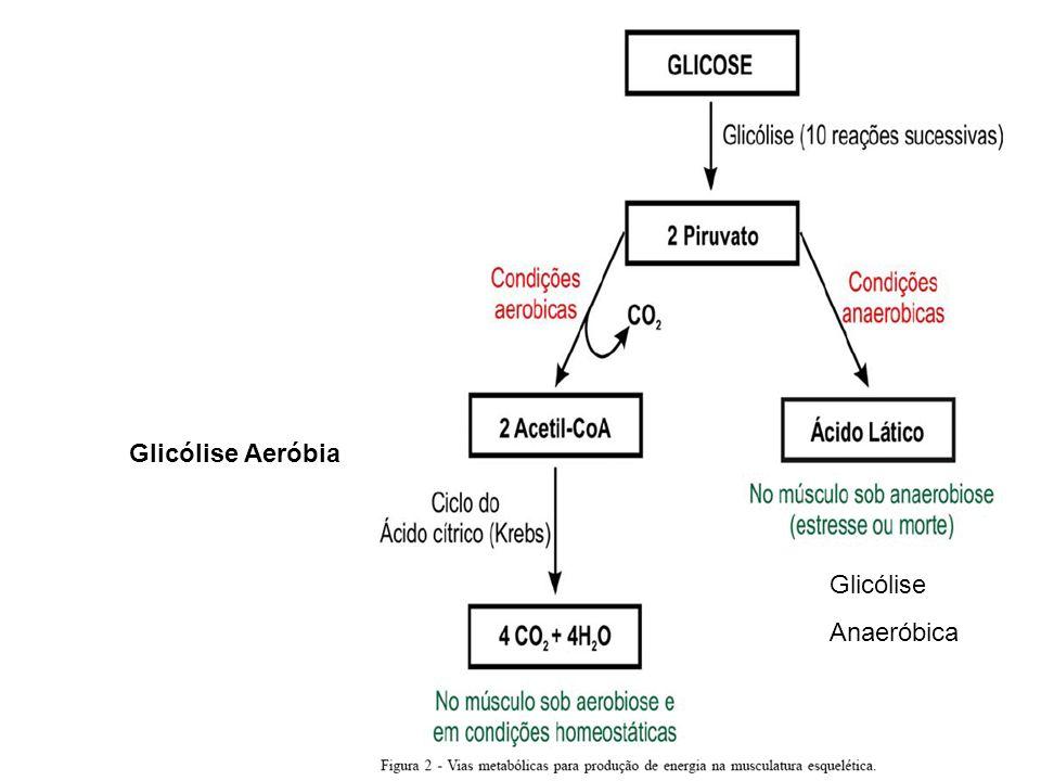 Glicólise Aeróbia Glicólise Anaeróbia Glicólise Anaeróbica