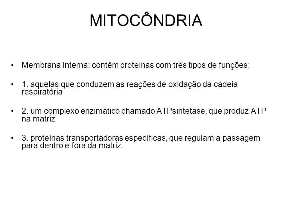 MITOCÔNDRIA Membrana Interna: contêm proteínas com três tipos de funções: 1. aquelas que conduzem as reações de oxidação da cadeia respiratória.