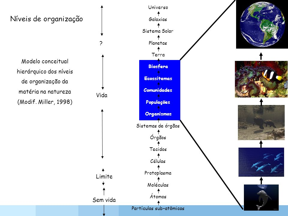 Universo Níveis de organização. Galaxias. Sistema Solar. Planetas. Terra.