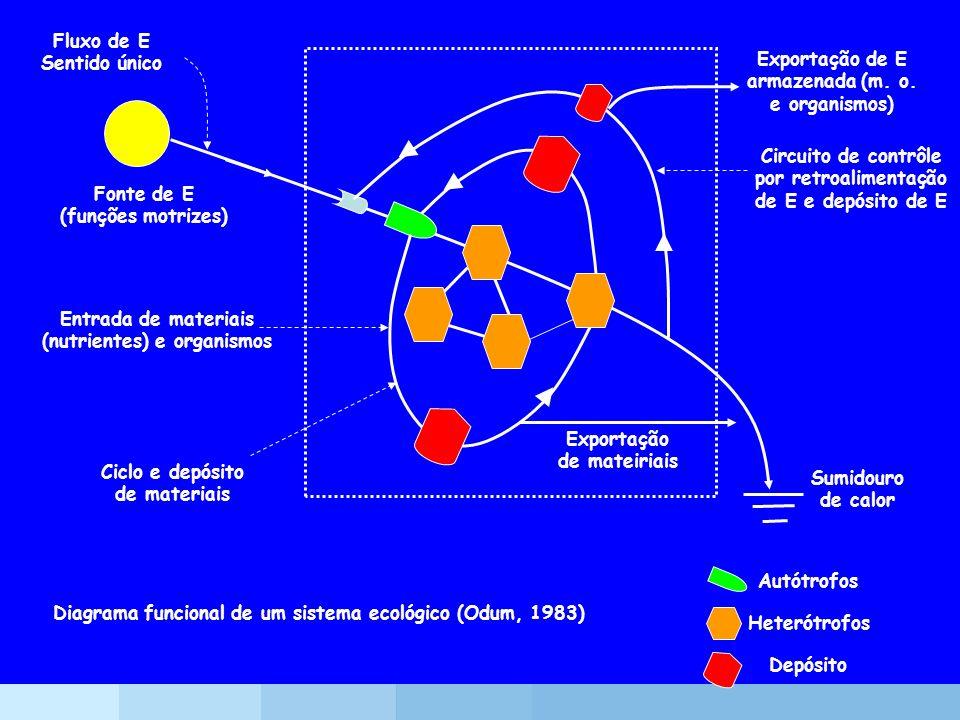Exportação de E armazenada (m. o. e organismos)