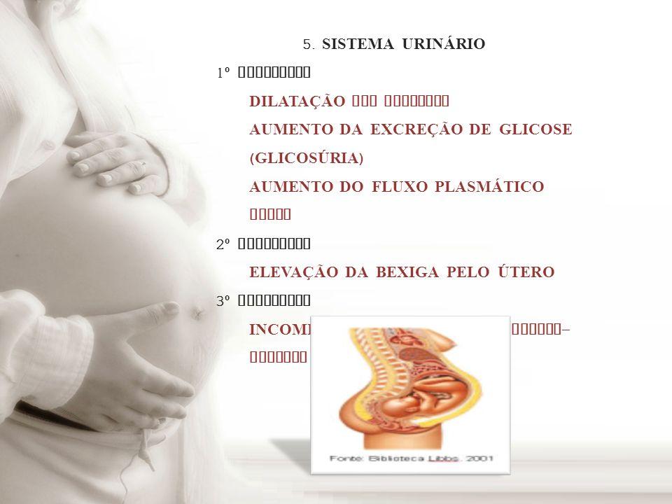 5. SISTEMA URINÁRIO1º TRIMESTRE. DILATAÇÃO DOS URETERES. AUMENTO DA EXCREÇÃO DE GLICOSE (GLICOSÚRIA)