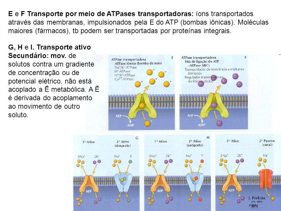 E e F Transporte por meio de ATPases transportadoras: íons transportados através das membranas, impulsionados pela E do ATP (bombas iônicas). Moléculas maiores (fármacos), tb podem ser transportadas por proteínas integrais.