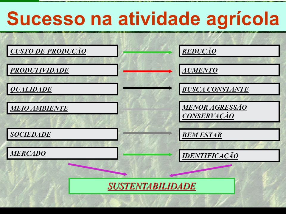 Sucesso na atividade agrícola