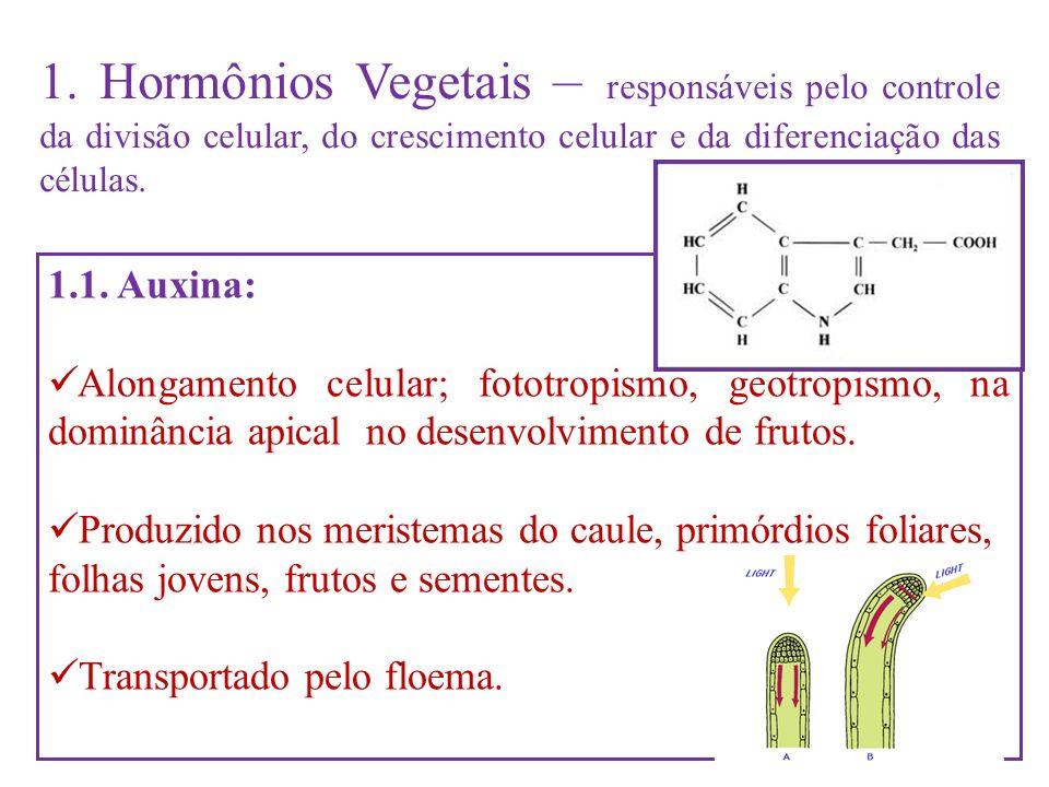 1. Hormônios Vegetais – responsáveis pelo controle da divisão celular, do crescimento celular e da diferenciação das células.