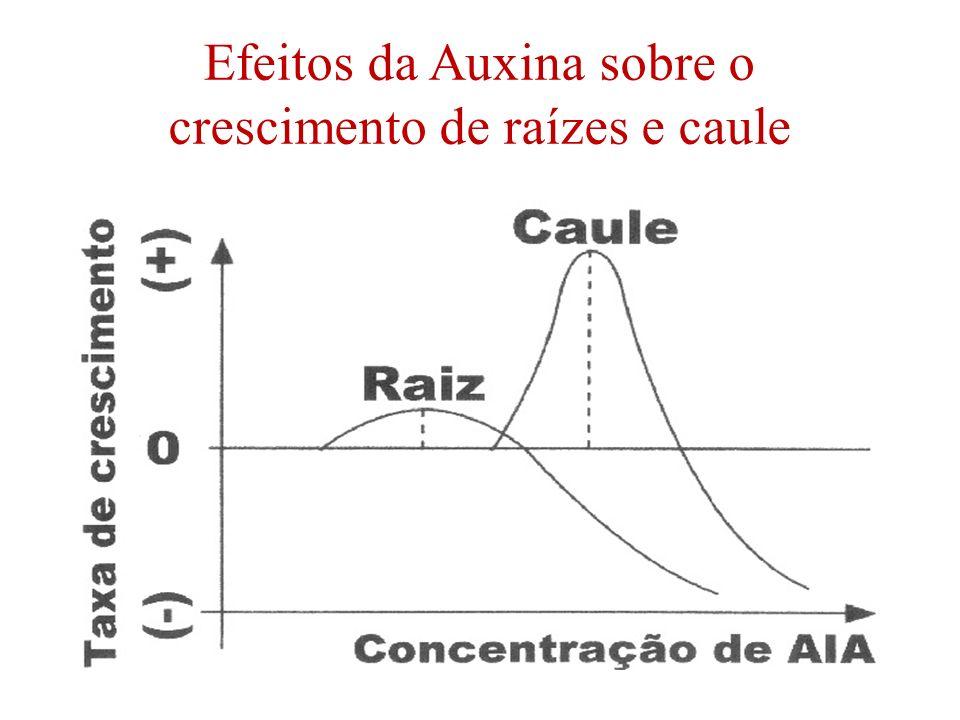 Efeitos da Auxina sobre o crescimento de raízes e caule
