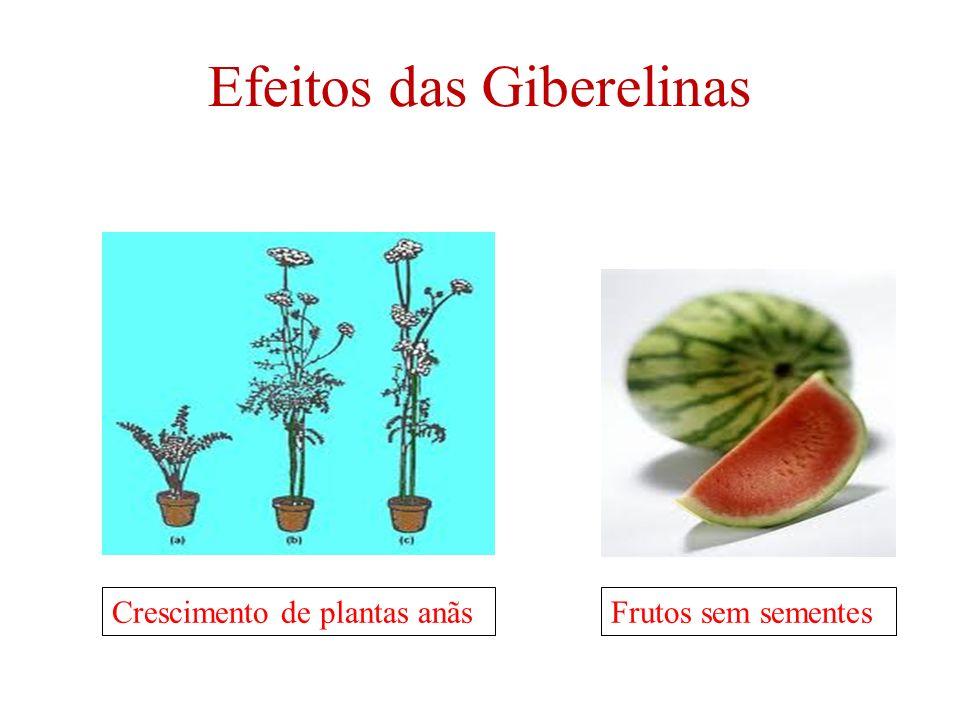 Efeitos das Giberelinas