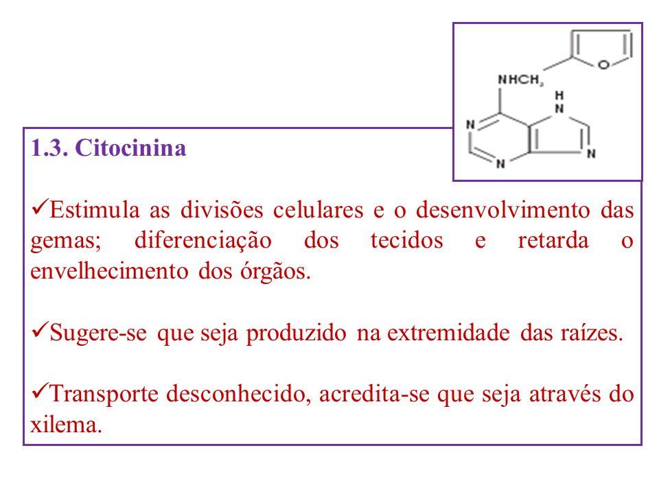 1.3. CitocininaEstimula as divisões celulares e o desenvolvimento das gemas; diferenciação dos tecidos e retarda o envelhecimento dos órgãos.