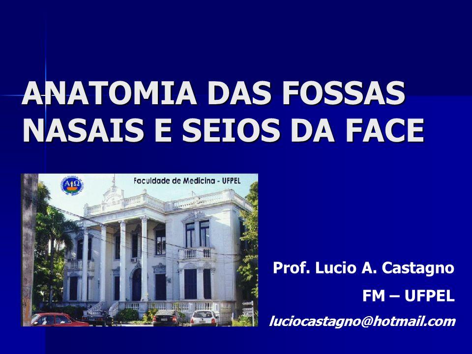 ANATOMIA DAS FOSSAS NASAIS E SEIOS DA FACE