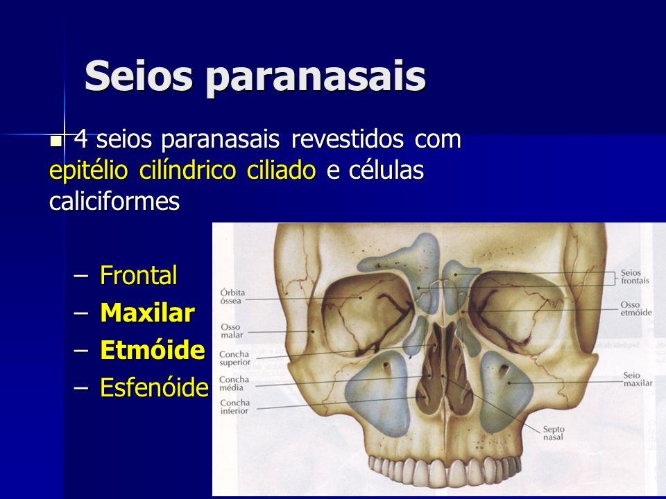 Seios paranasais 4 seios paranasais revestidos com epitélio cilíndrico ciliado e células caliciformes.