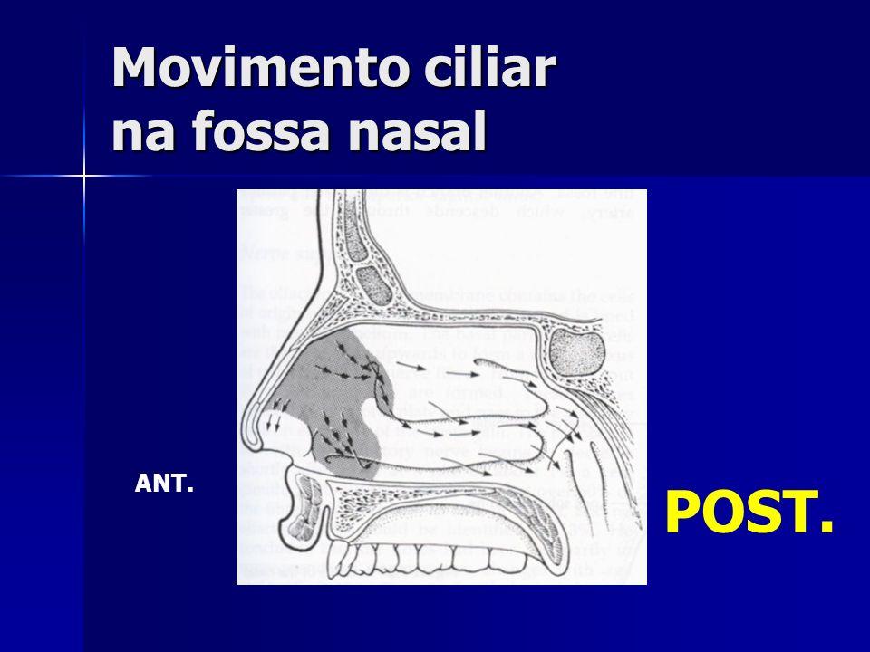 Movimento ciliar na fossa nasal
