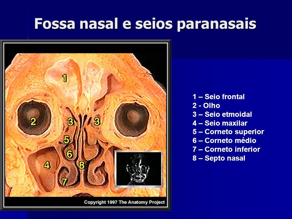Fossa nasal e seios paranasais
